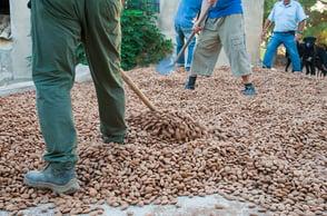 bigstock-Farmers-Putting-Just-Picked-Al-258413965